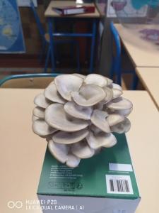 champis (10)